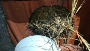 Nid d'oiseau au bout d'une gaine pendant un chantier